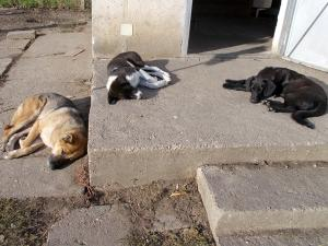 kutya-orokbefogadas-hajduszoboszlo-2017-oktober-127
