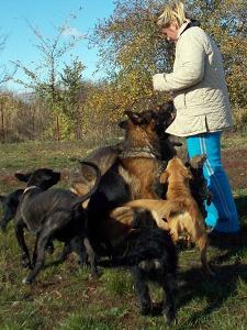 kutya-orokbefogadas-hajduszoboszlo-2017-oktober-15