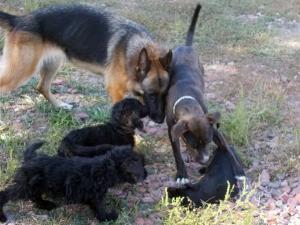 kutya-orokbefogadas-hajduszboszlo-menhely-2017-szeptember-102