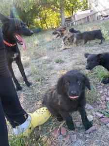 kutya-orokbefogadas-hajduszboszlo-menhely-2017-szeptember-104
