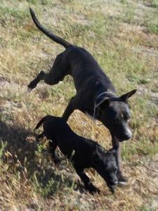 kutya-orokbefogadas-hajduszboszlo-menhely-2017-szeptember-109