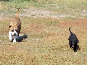 kutya-orokbefogadas-hajduszboszlo-menhely-2017-szeptember-113
