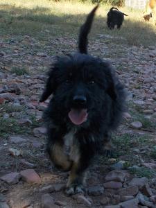 kutya-orokbefogadas-hajduszboszlo-menhely-2017-szeptember-119