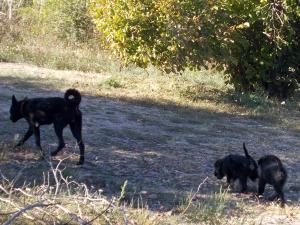 kutya-orokbefogadas-hajduszboszlo-menhely-2017-szeptember-123
