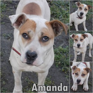 Amanda-dog-adoption 1