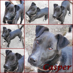 Casper-dog-adoption