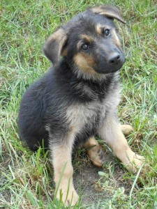delon adopted in Hungary